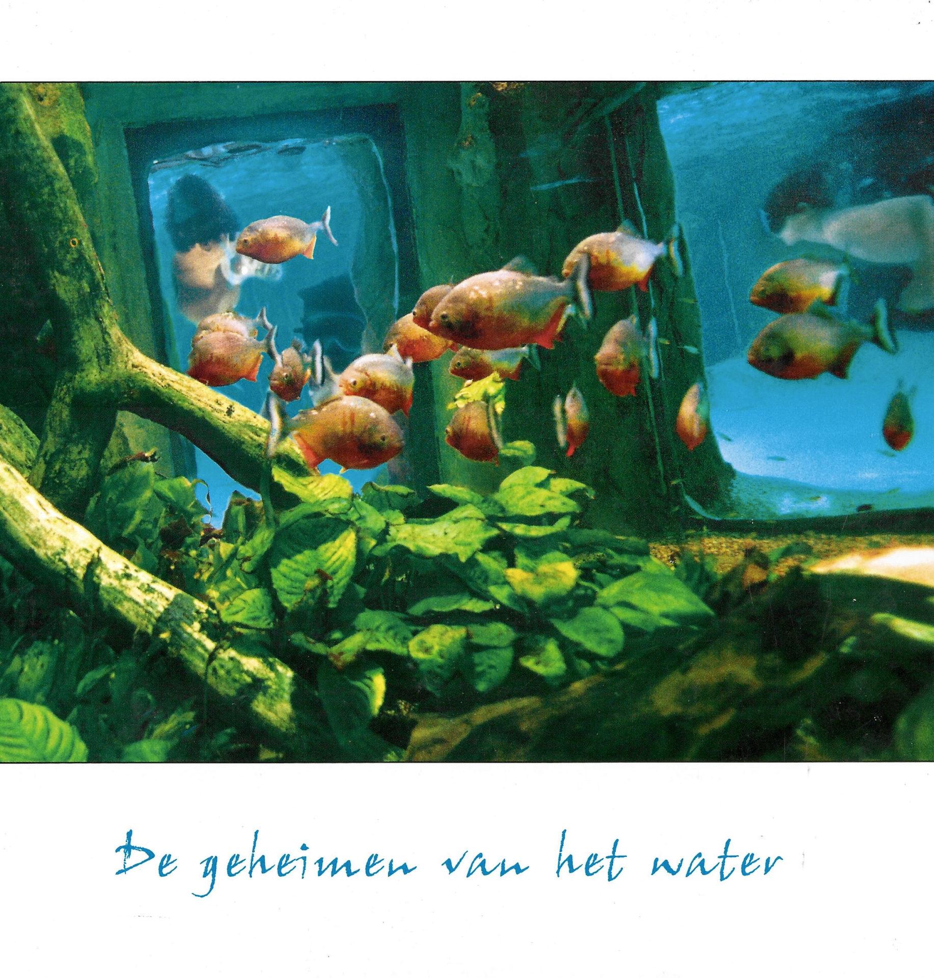 center parcs geheimen van het water jubileumboek